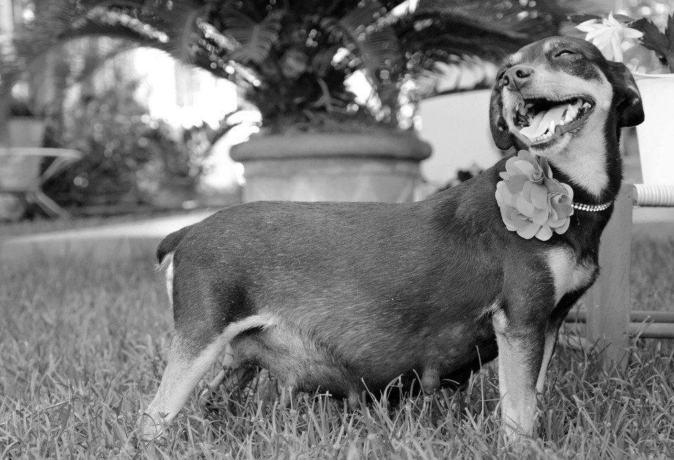 dog-maternity-photo-shoot9