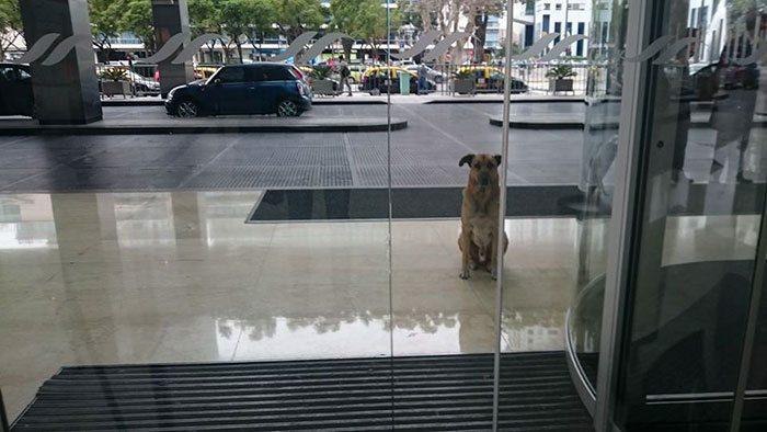 flight-attendant-adopts-dog1