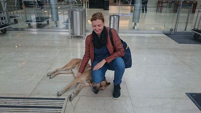flight-attendant-adopts-dog3