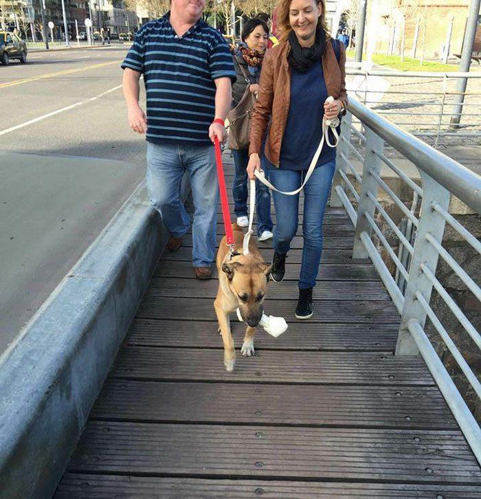 flight-attendant-adopts-dog5