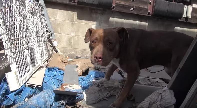 Rescue Dog Scared