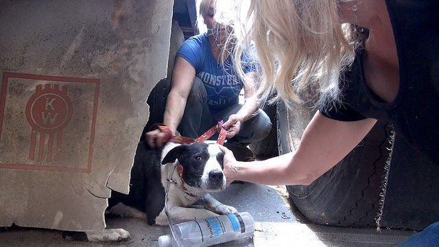 homeless-dogs-scared-being-rescued7