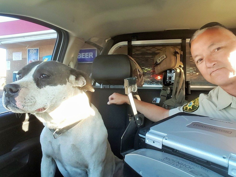 officer-and-dog-selfie4