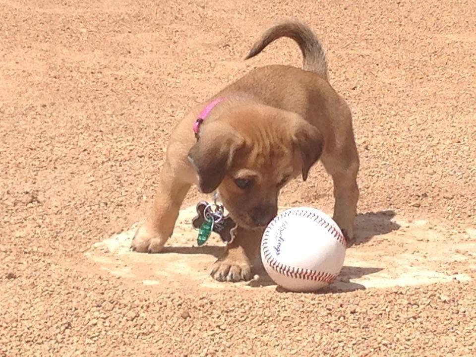 puppy-at-baseball-stadium3