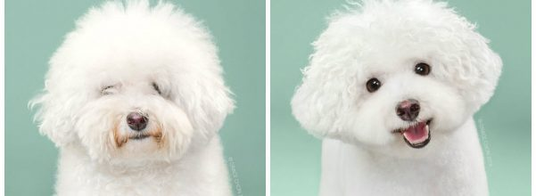 dogs before and after haircut