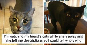 funny pet sitter note