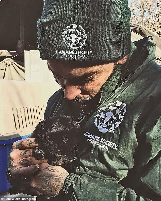 pete wicks dog rescue